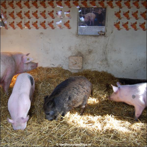 logeermoeder La Mama met biggen Edwin, Mister Frisling en Aagje