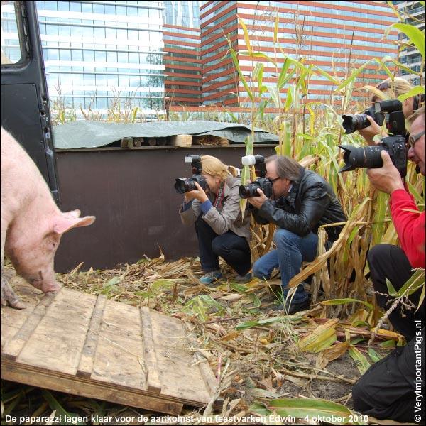 De paparazzi lagen klaar voor de aankomst van feestvarken Edwin - 4 oktober 2010