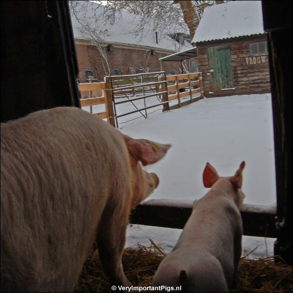 La Mama & Edwin bewonderen de sneeuw